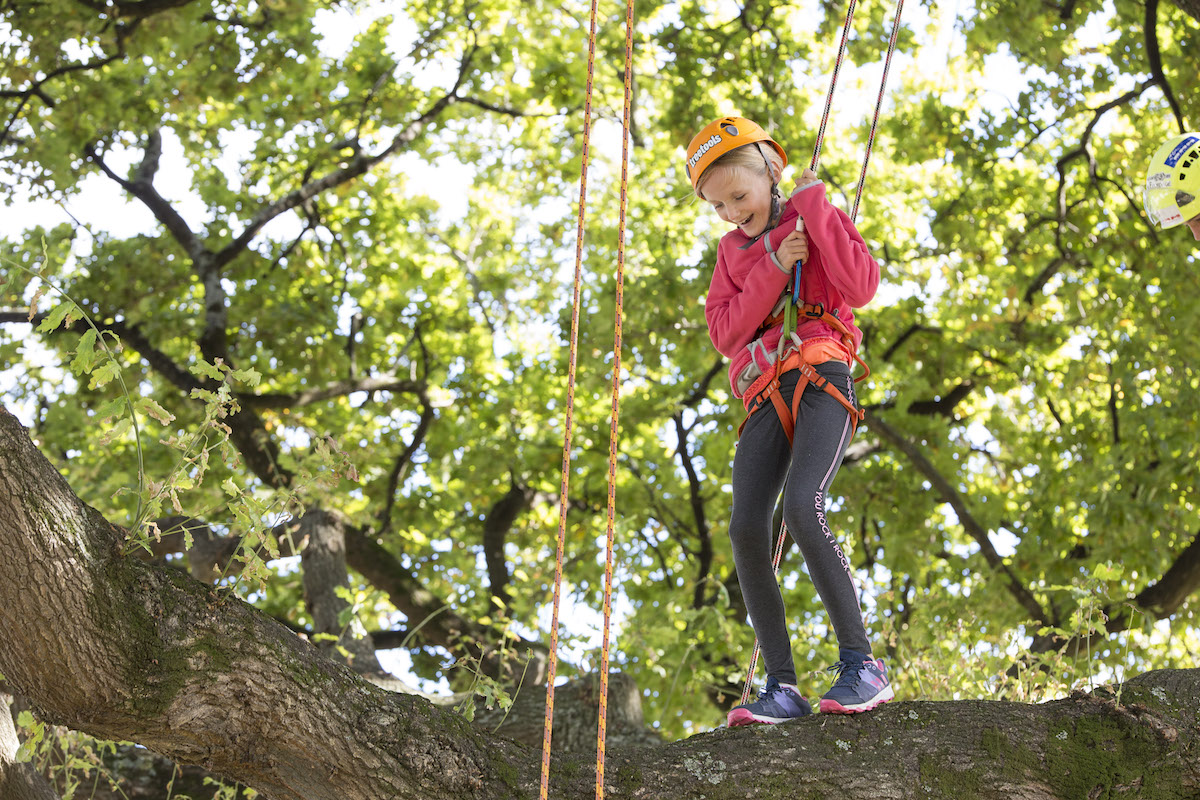 Kids Tree Climbing