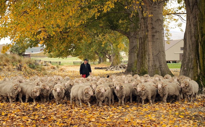 Running of the Wools