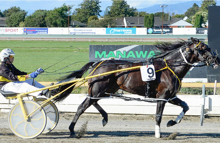 NZ Harness Racing Gearing Up Championship