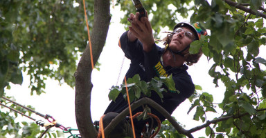Speed-Tree-Climbing-featured